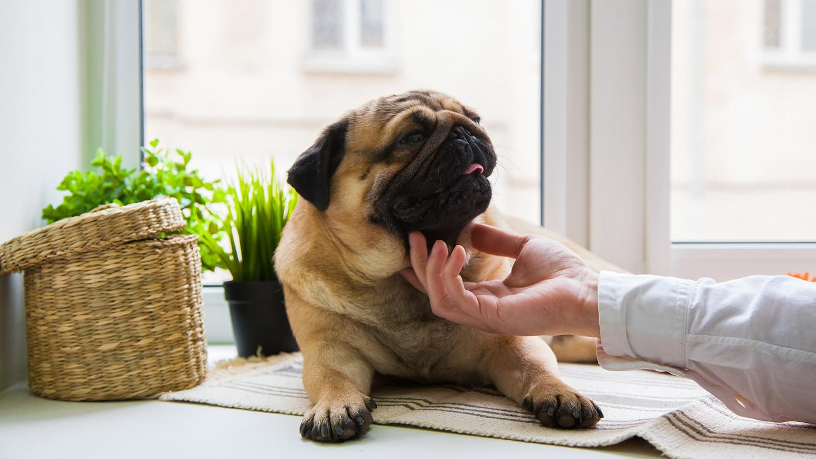 Animals will love ample balcony space and close proximity to expansive greenscapes.